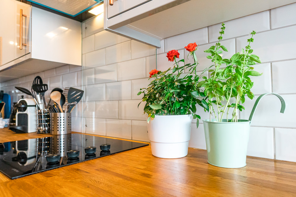 A potted rose and a potted basil plant sit on a kitchen counter next to a stove, bringing nature indoors