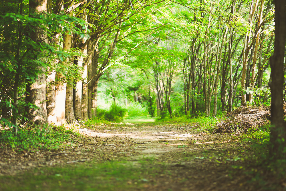 A forest nature path winds off into the distance with verdant trees on both sides