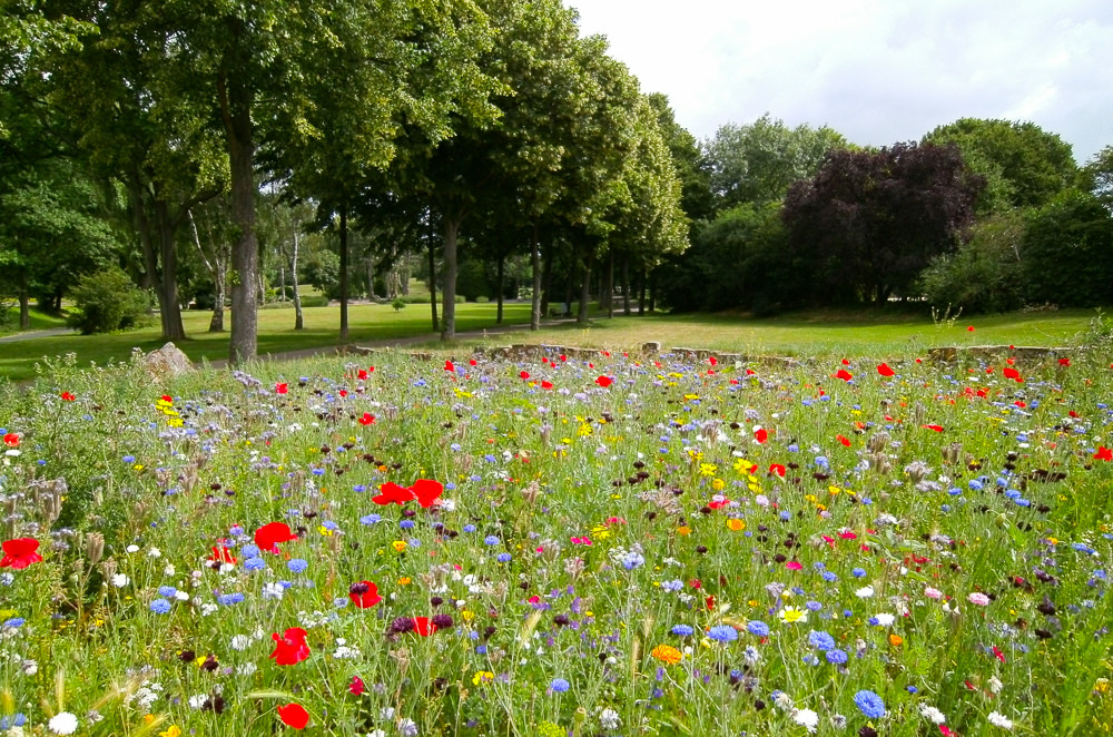 a field of wildflowers sits in the middle of a park with trees and grass