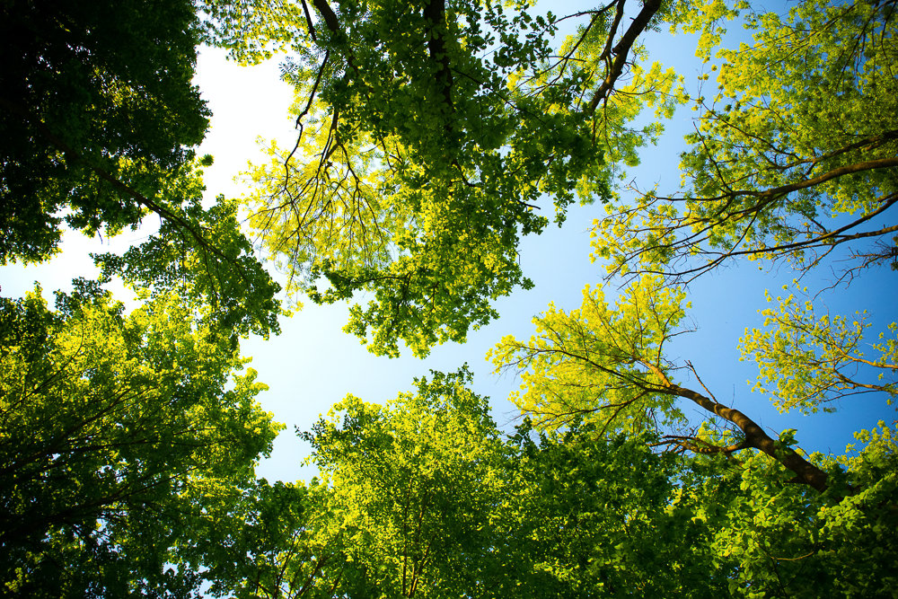 The camera looks up towards a bright blue sky through a canopy of trees