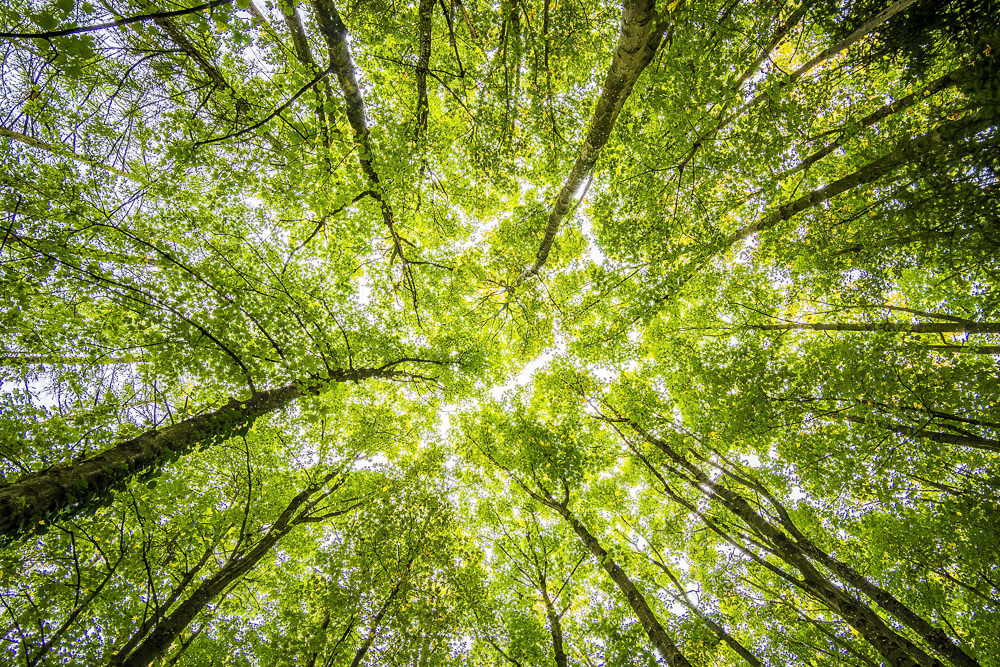 The camera points upwards into tree branches and leaves revealing the beauty of nature