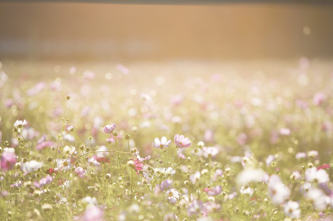 A field of flowers represents the many possibilities that planning ahead provides